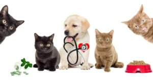Dog in between two cats holding a stethoscope
