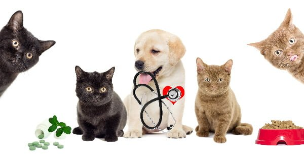 Dreamwork Financial Group Spector Fund - Pampering Our Pets - Dog and 2 Cats with a medical tools